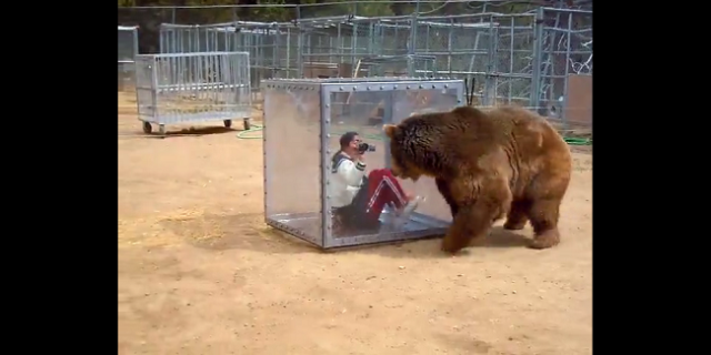 Viral bear video evidence of a crazy Japanese game show? Maybe not…【Video】