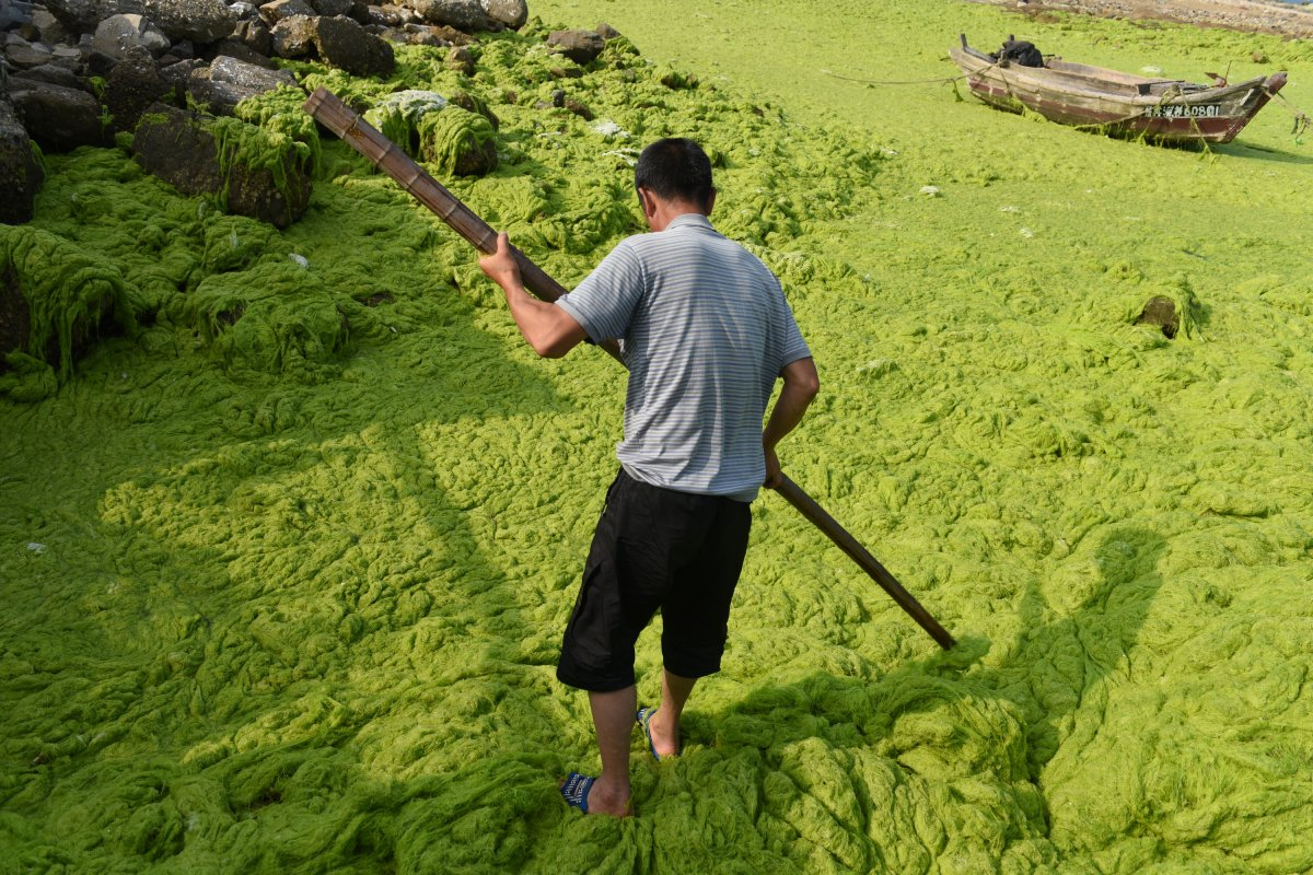 but-luckily-there-are-some-ways-to-use-the-algae-to-benefit-the-community-it-makes-for-a-good-fertilizer-and-green-energy-source