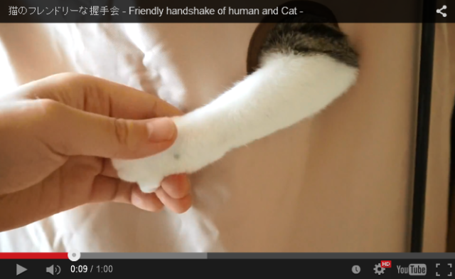 Japanese kitty doesn't seem to grasp the difference between shaking hands and boxing 【Video】