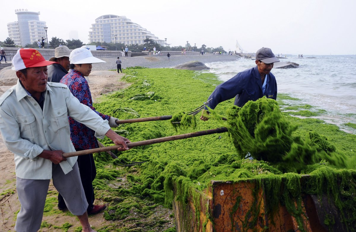 cleaning-it-up-is-no-small-feat--it-has-to-be-done-quickly-because-the-algae-begins-to-stink-like-rotten-eggs-when-it-decomposes-here-workers-scoop-up-the-algae-during-the-2014-bloom