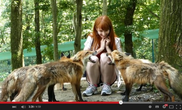 "100 fuzzy, friendly foxes fascinate foreigners at Kitsune Mura aka ""Fox Village"" 【Videos】"