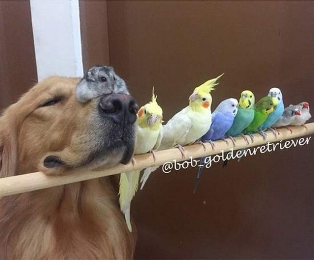 1 golden retriever + 8 birds + 1 hamster = 1 big happy animal family!