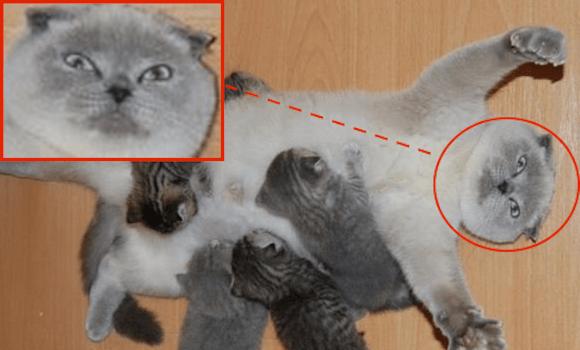Mama cat's breastfeeding pose perfectly encapsulates stress of new motherhood