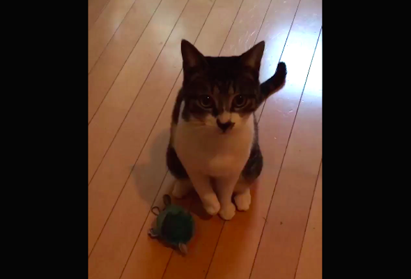 """""""This will go down in history"""": Cat displays unusual, impressive talent 【Video】"""