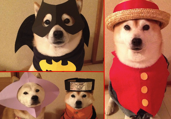 Super cute cosplaying Shiba Inu duo is here to make your day 2x happier! 【Pics】