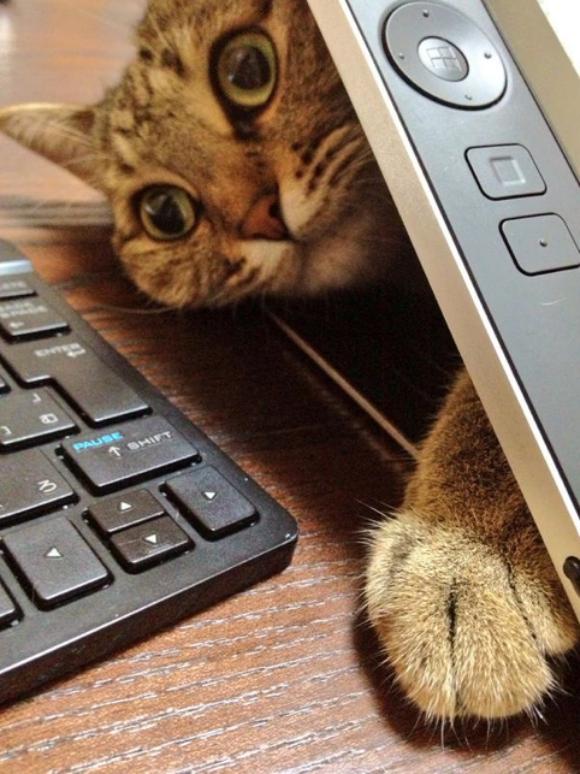 tabletcat3