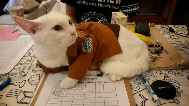 Attack on Kitten! Purrfectly adorable Levi cosplayer spotted in Taiwan 【Photos】