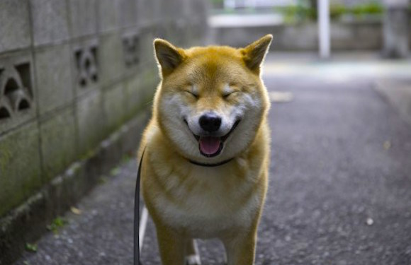 Survey reveals Shiba Inu named Maru to be Japan's second most popular Instagram account【Pics】