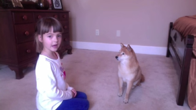 Little girl's instructional video of how to train your Shiba Inu is as cute as it is informative【Video】