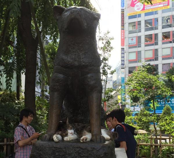 The perfect place for a Tokyo catnap? Under the statue of Japan's most famous dog, of course!