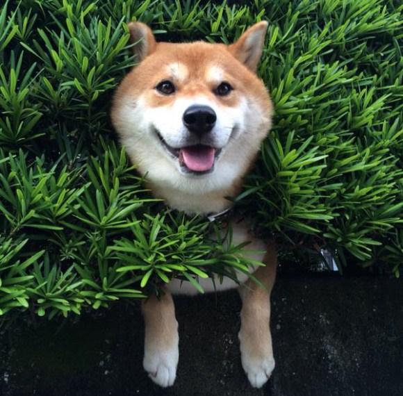 hedgedogtop