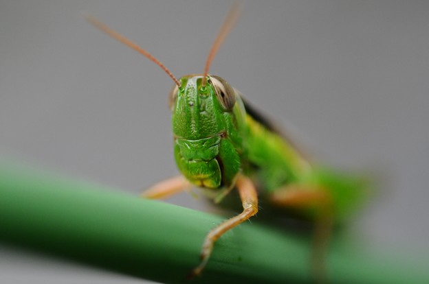 Everyone loves convenience stores in Japan, even the locusts 【Photos】