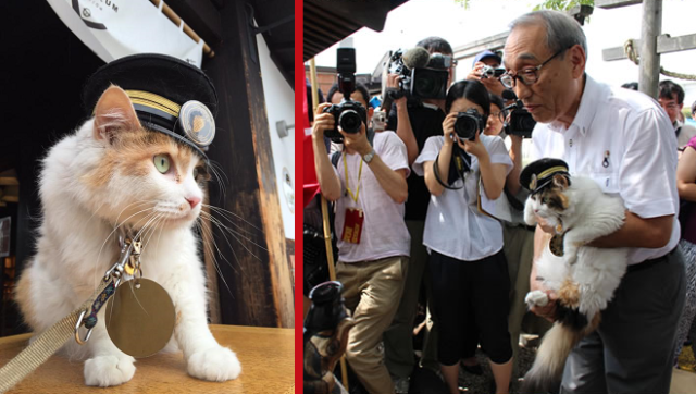 Japan gets a new stationmaster cat as Nitama is officially named successor to the departed Tama