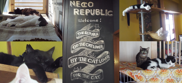 Neco Republic: A cat cafe for rescue cats and the people who love them 【Pics & Video】