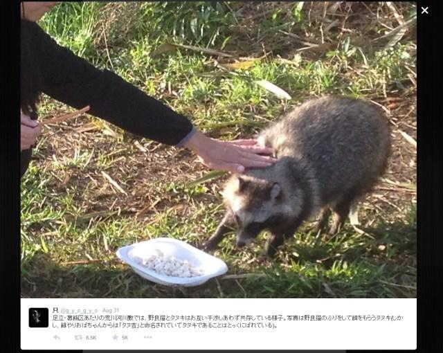 Tanuki magically disguises self as cat to get food