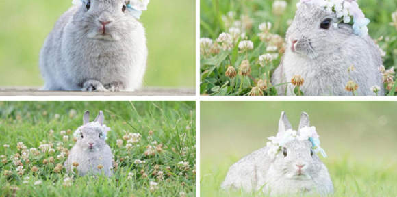 These bunnies have a Twitter account and you should be following it