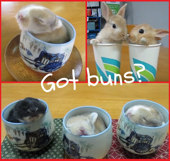 Sweet bunny pals relaxing in cups make us genkier than coffee ever could!【Videos】