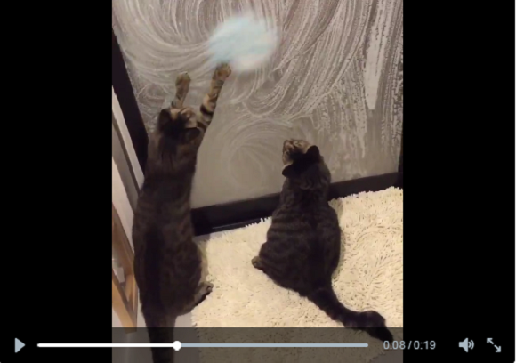 Cats try and help clean the shower – end up staying to play