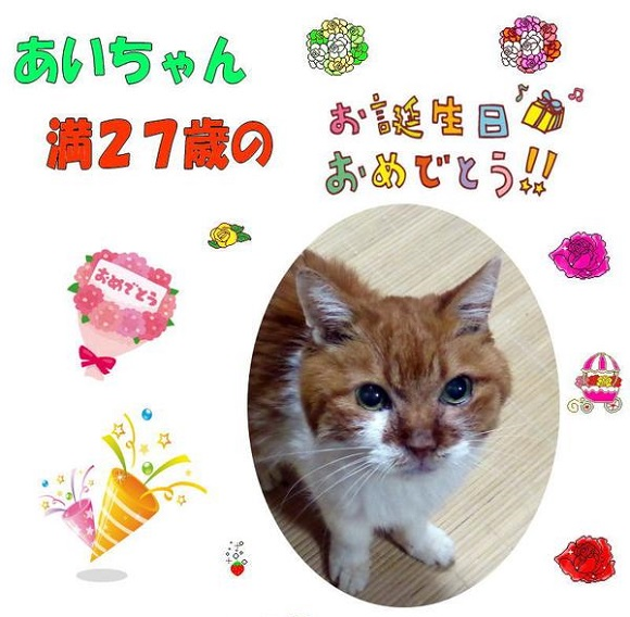 Is this the oldest cat in the world? Japanese kitty Ai-chan turns 27 【Pics】