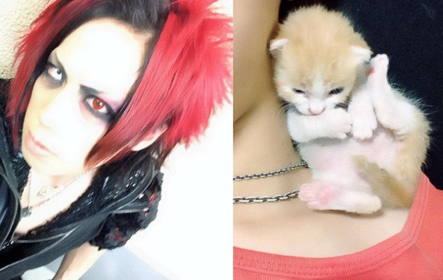 Drummer for visual kei band evokes smiles online with photos of adorable rescue kitten