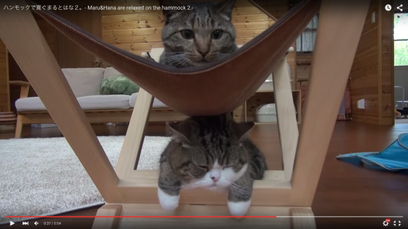 Maru the cat attempts to use a hammock, fails adorably 【Videos】