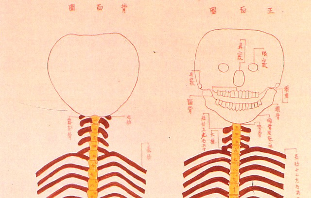These Edo-period sketches of human skeletons are oddly adorable despite being totally creepy