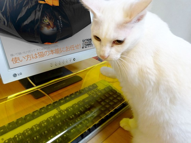 Has it come to this? Japanese company produces plastic cover to keep kitty off your keyboard