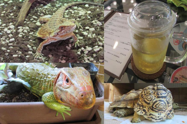 Tired of cat cafes? It turns out Japan has reptile cafes too!