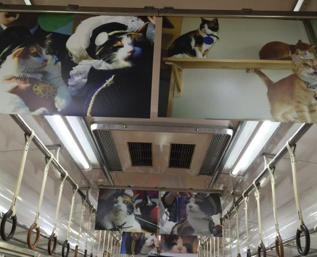 Train line celebrates the life of Stationmaster Tama the cat with in-train photo exhibit