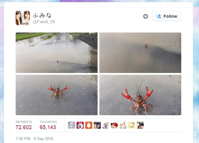 Lone crayfish stands in defiance of floods