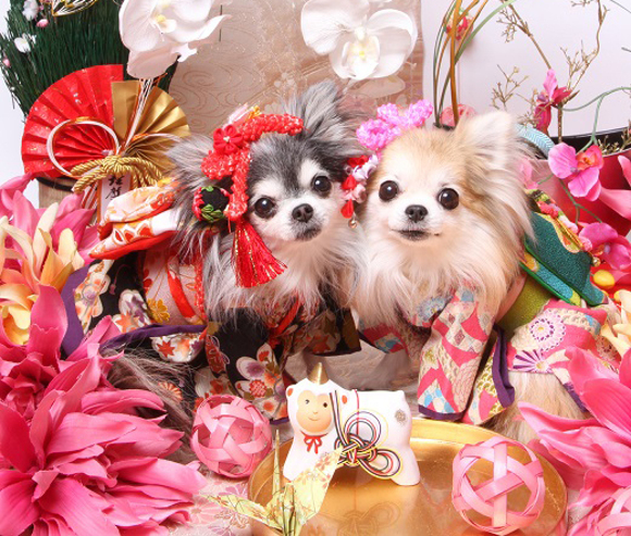 Celebrate the New Year with kimono dogs!