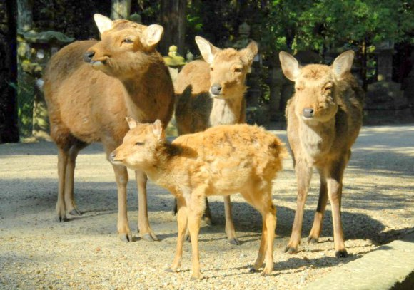 Thinking about moving to Nara? Here are eight things that may surprise you!