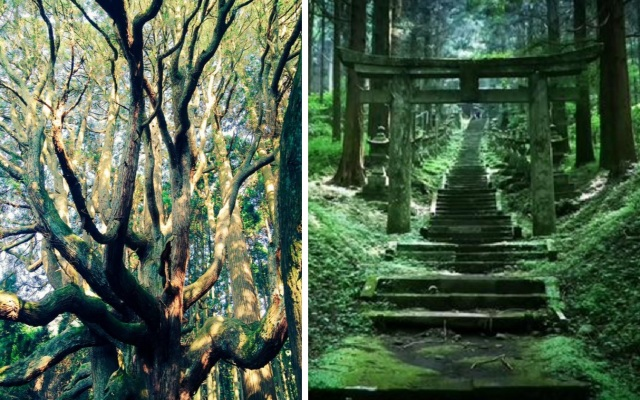 "This ""power spot"" in Kumamoto, Japan looks straight out of a Ghibli movie, is pure magic 【Photos】"