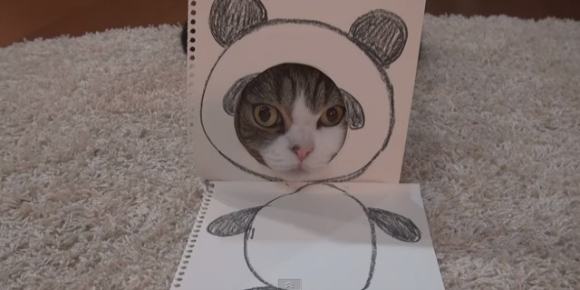 Maru the cat enthrals us with his adorable animal costumes【Video】