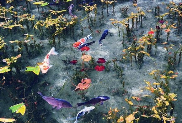 "Gifu Prefecture's ""Monet's Pond"" is the perfect picturesque place to paint a picture【Photos】"