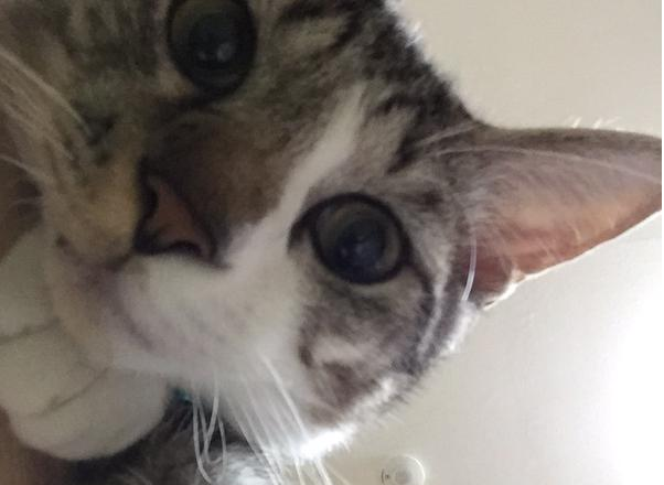 This cute kitty knows just how to work those selfie angles!