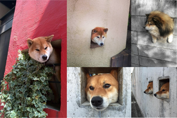 Wall dogs: Pups poking their heads through holes wanting to join you on your walkies 【Pics】