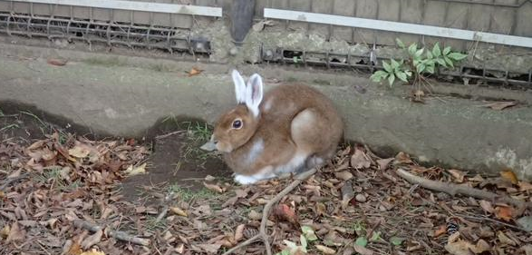 Japan has rabbits that cosplay each fall…as other rabbits?!? 【Photos】