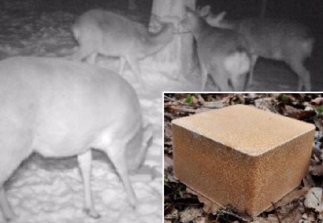 Why deer are drawn to train tracks, and how Japan is solving the problem with this simple block