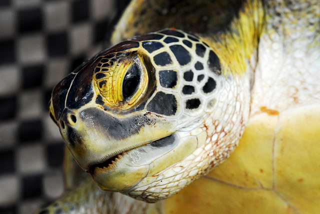 Japan Railways implements new innovation to make train tracks safer… for turtles?