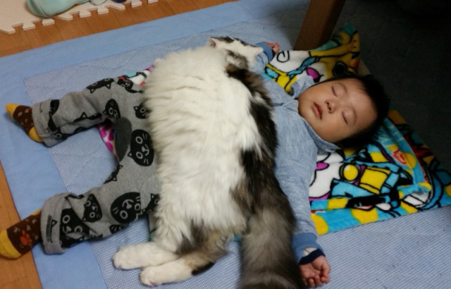 Japanese cat becomes blanket, warms sleeping baby's tummy and our hearts 【Photos】