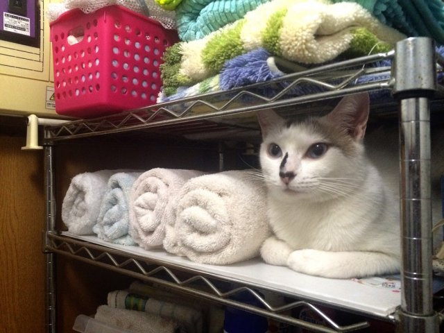 """I was reaching for a towel when…"" — Cat's attempt at camouflage fails adorably"