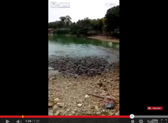 Watching these fish feed is a little freaky and frightening【Video】