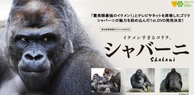 Japan's phenomenally handsome gorilla getting nationwide DVD release