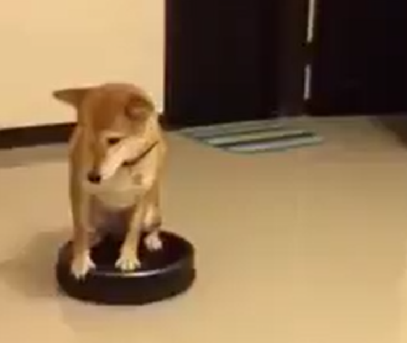 Roomba Doge is here to make your week so much better 【Video】