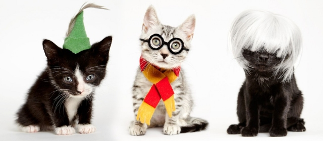 Adorkably stylish cosplay cats remind us to adopt pets instead of buy them 【Photos】