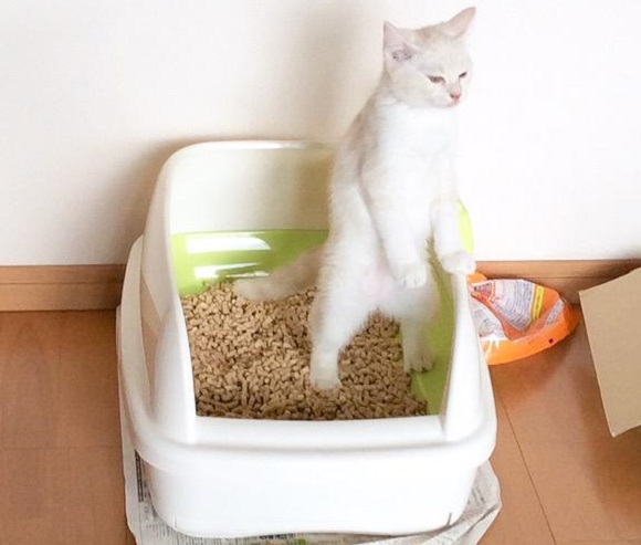 Monday Kickstart: Laugh at these bewildering photos of cats standing in their litter boxes【Pics】