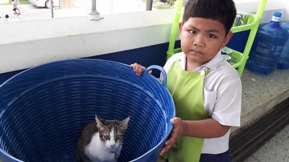 school cat 1