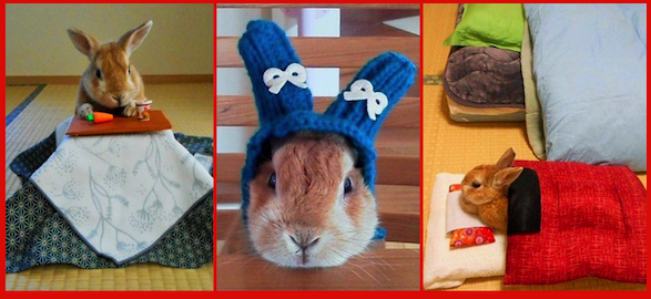 The real My Melody? Twitter user knits tiny hat for kotatsu, futon-owning bunny【Pics】