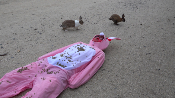 We visited Rabbit Island in a bunny suit covered in food, to become a rabbit ourselves【Photos】